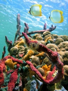 colourful sea sponges