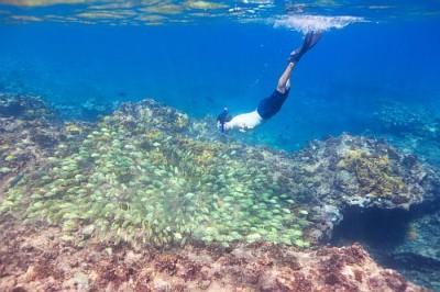 Diving off Mauritius