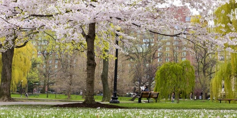 Boston_Garden