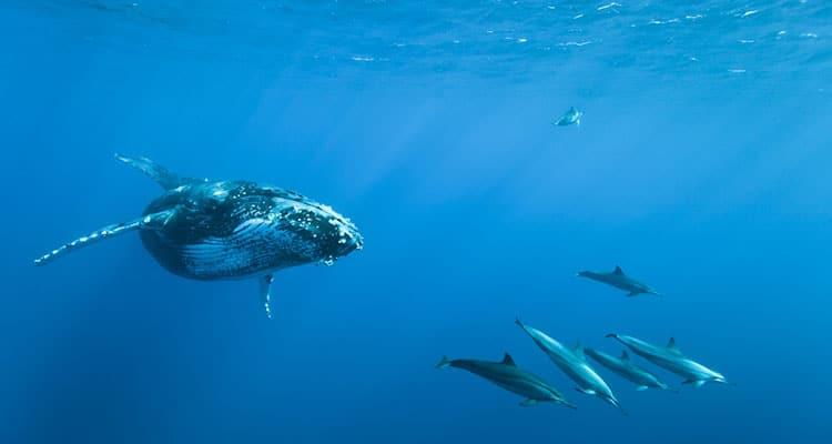 Whale_Exotismes