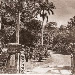 Roseau Botanic Gardens
