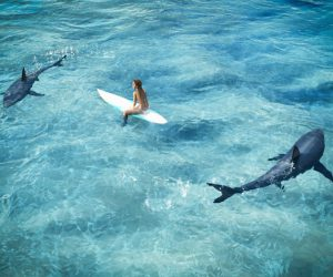 Shark-surfer