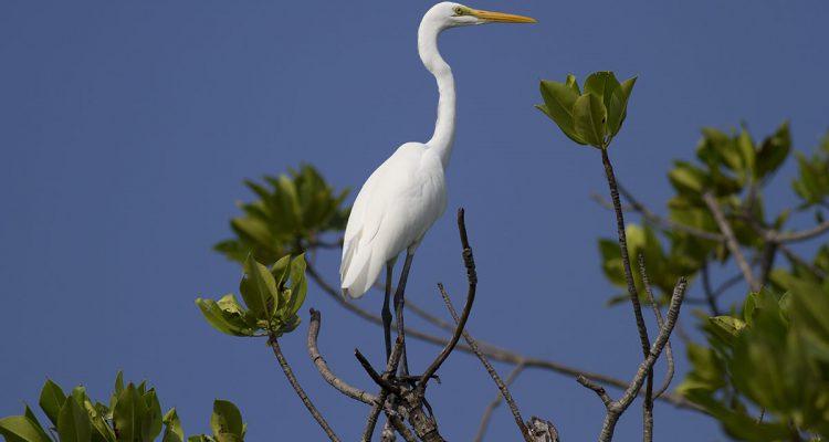 Lafayette Birds